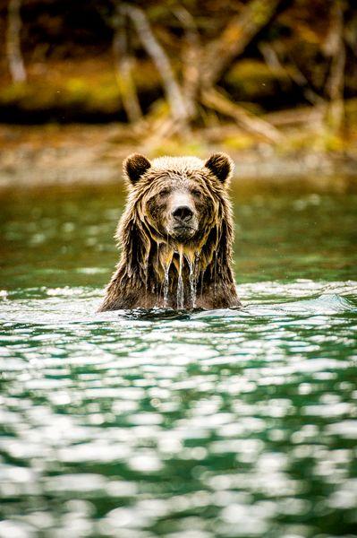 I_Jumbo Wild_Copyright_S Ogle(c)2015 Patagonia, Inc.