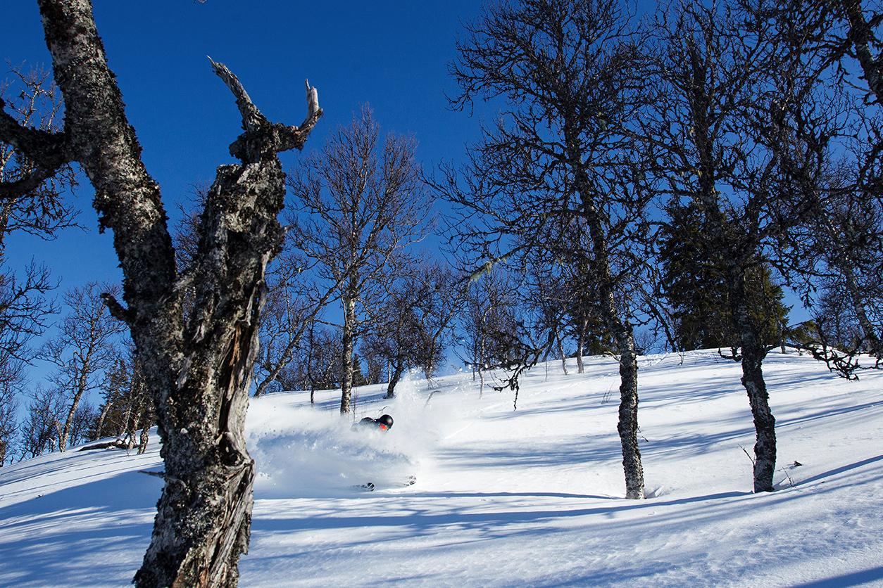 Kurze spaßige Tree Runs prägen das Bild in den Bergen von Jämtland - ideal zum Cruisen