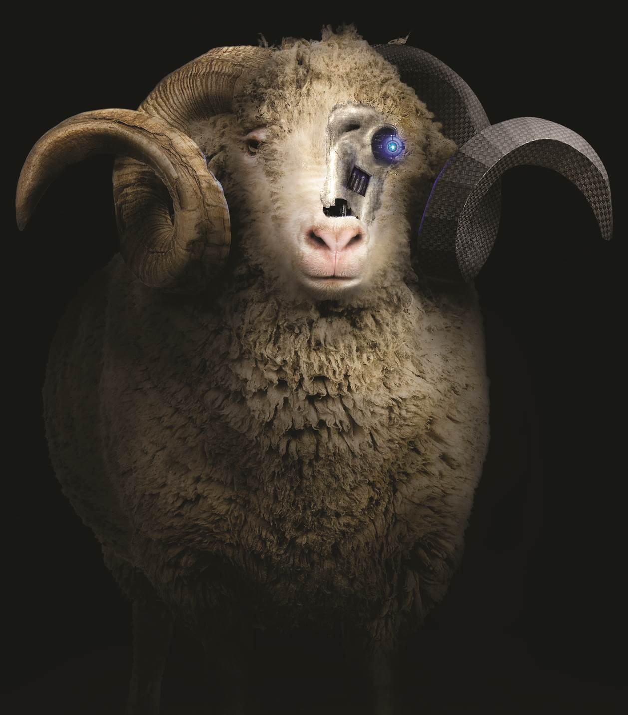 polartec-power-wool-sheep