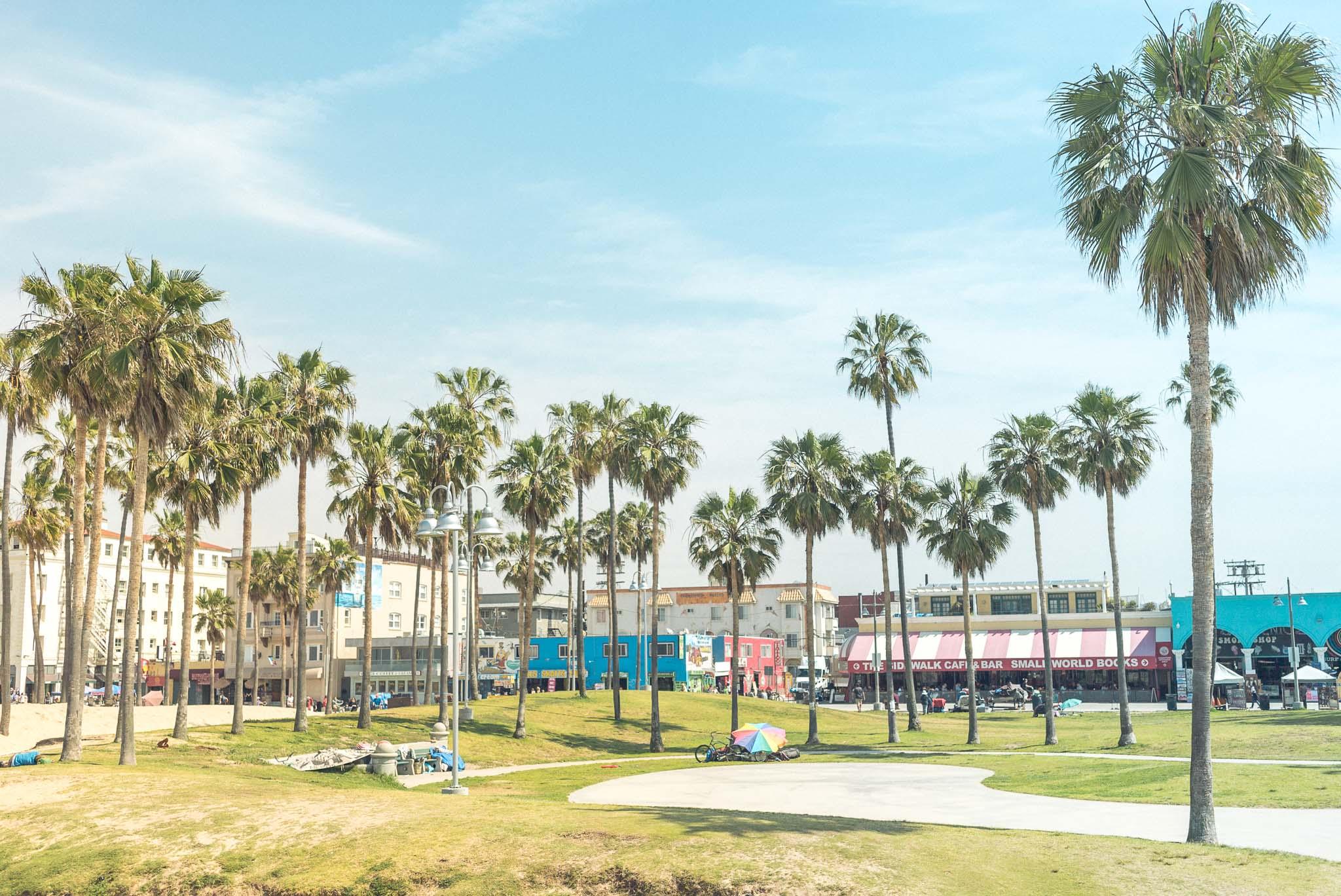 Blick vom Skatepark am Venice Beach auf die Flaniermeile und natürlich: Palms everywhere
