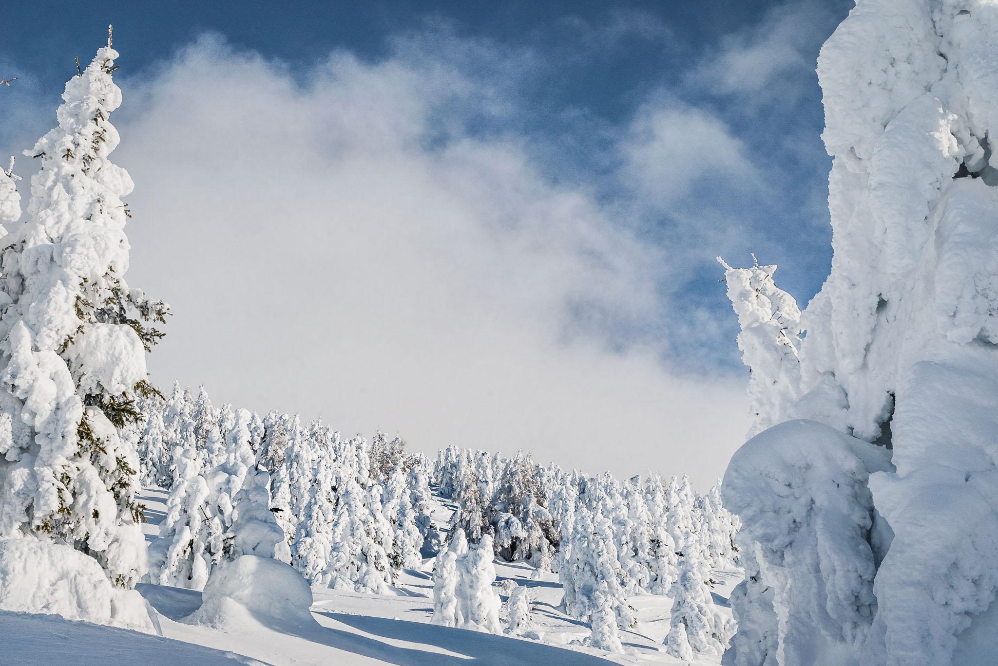 Direkt neben bzw. oberhalb des Parks befindet sich ein Feld, dass sich bei Schneefall in ein Traumland verwandelt und viele Möglichkeiten für Jumps bereithält.